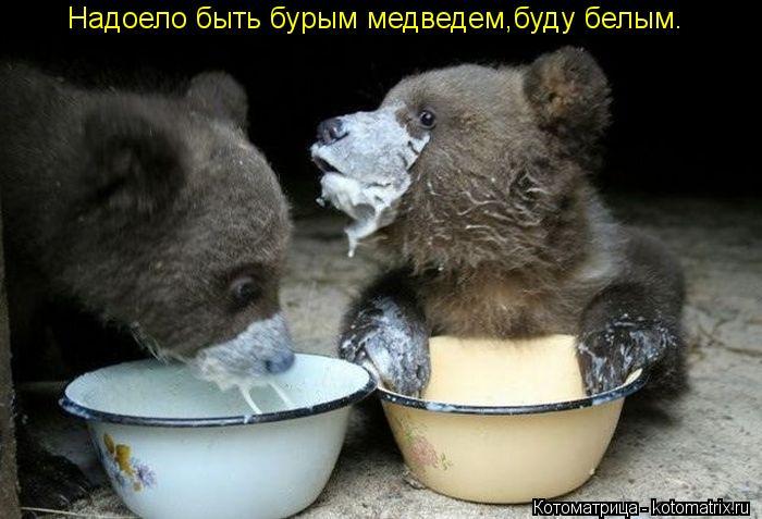 Котоматрица: Надоело быть бурым медведем,буду белым.