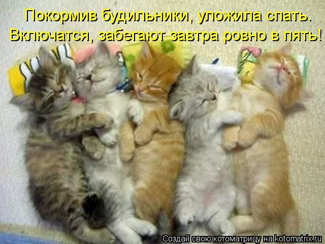 Котоматрица: Покормив будильники, уложила спать. Включатся, забегают завтра ровно в пять!