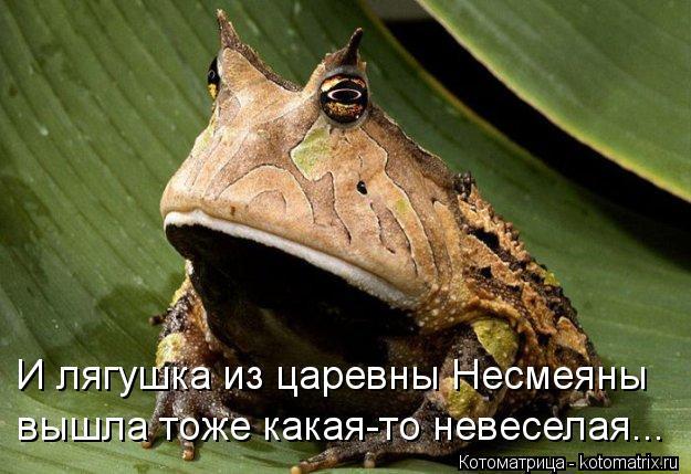 http://kotomatrix.ru/images/lolz/2013/01/14/kotomatritsa_px.jpg