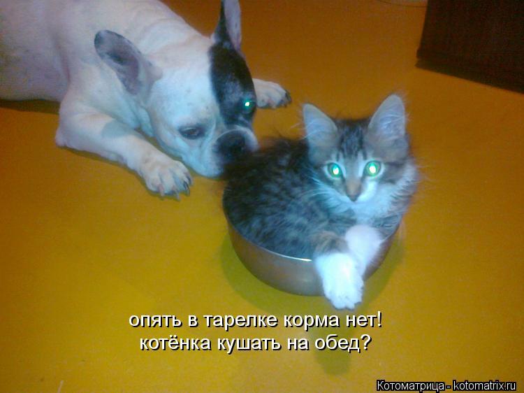 Котоматрица: опять в тарелке корма нет! котёнка кушать на обед?