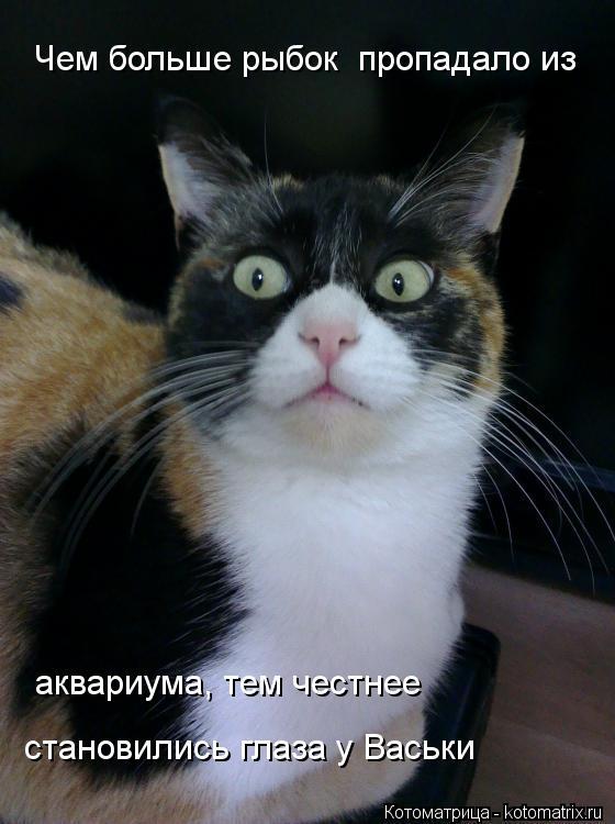 Котоматрица: Чем больше рыбок  пропадало из аквариума, тем честнее  становились глаза у Васьки