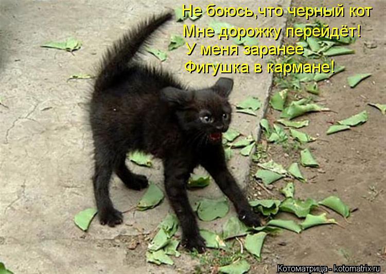 Котоматрица: Не боюсь,что черный кот Мне дорожку перейдёт! Фигушка в кармане! У меня заранее