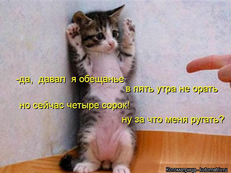 Котоматрица: -да,  давал  я обещанье в пять утра не орать но сейчас четыре сорок! ну за что меня ругать?