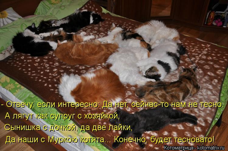 Котоматрица: Да наши с Муркою котята... Конечно, будет тесновато! Сынишка с дочкой, да две лайки,  А лягут как супруг с хозяйкой,   - Отвечу, если интересно: Д