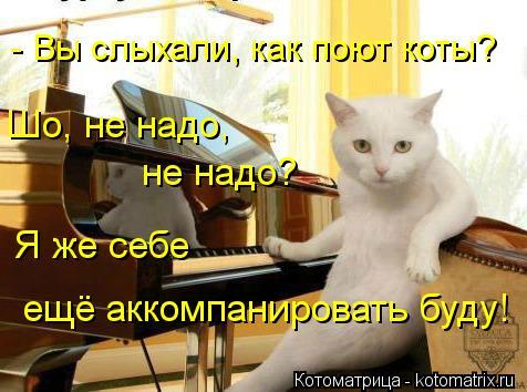 Котоматрица: Шо, не надо,  не надо? Я же себе ещё аккомпанировать буду! - Вы слыхали, как поют коты?