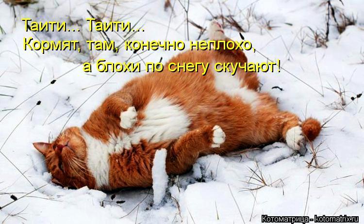 Котоматрица: Таити... Таити... Кормят, там, конечно неплохо, а блохи по снегу скучают!