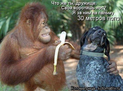 Котоматрица: Что же ты, дружище, Свой воротишь нос? Я за ним на пальму 30 метров полз!