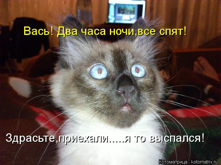 Котоматрица: Вась! Два часа ночи,все спят! Здрасьте,приехали.....я то выспался!
