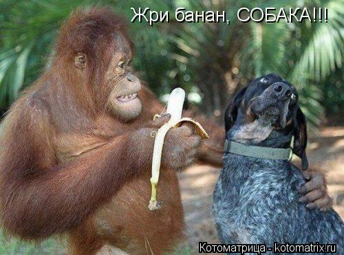 Котоматрица: Жри банан, СОБАКА!!!