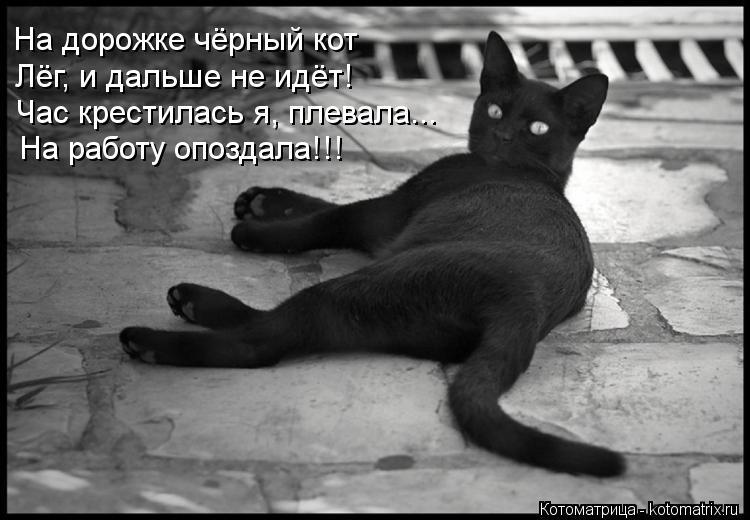 Котоматрица: На дорожке чёрный кот Лёг, и дальше не идёт! Час крестилась я, плевала... На работу опоздала!!!