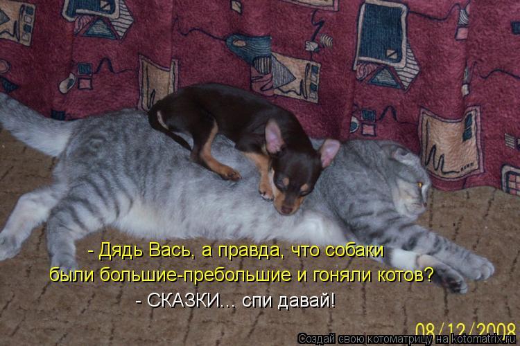 Котоматрица: - Дядь Вась, а правда, что собаки были большие-пребольшие и гоняли котов? - СКАЗКИ... спи давай!