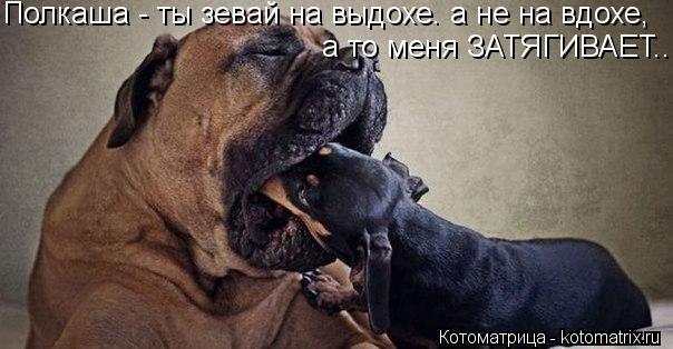 Котоматрица: Полкаша - ты зевай на выдохе. а не на вдохе, а то меня ЗАТЯГИВАЕТ..