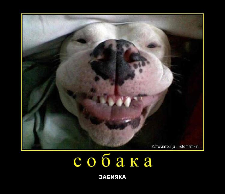 Котоматрица: собака ЗАБИЯКА