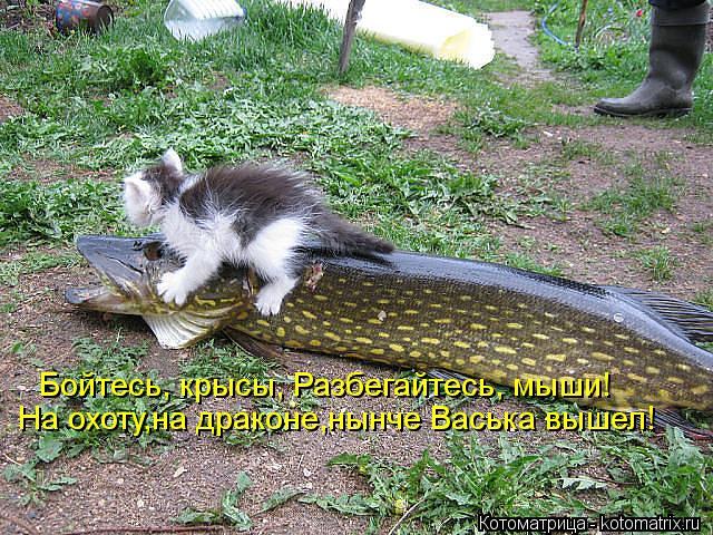 Котоматрица: На охоту,на драконе,нынче Васька вышел! Бойтесь, крысы, Разбегайтесь, мыши!
