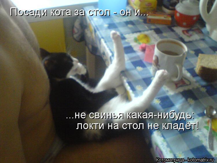 Котоматрица: Посади кота за стол - он и... ...не свинья какая-нибудь: локти на стол не кладёт!