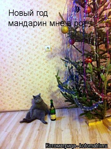 Котоматрица: Новый год  мандарин мне в рот