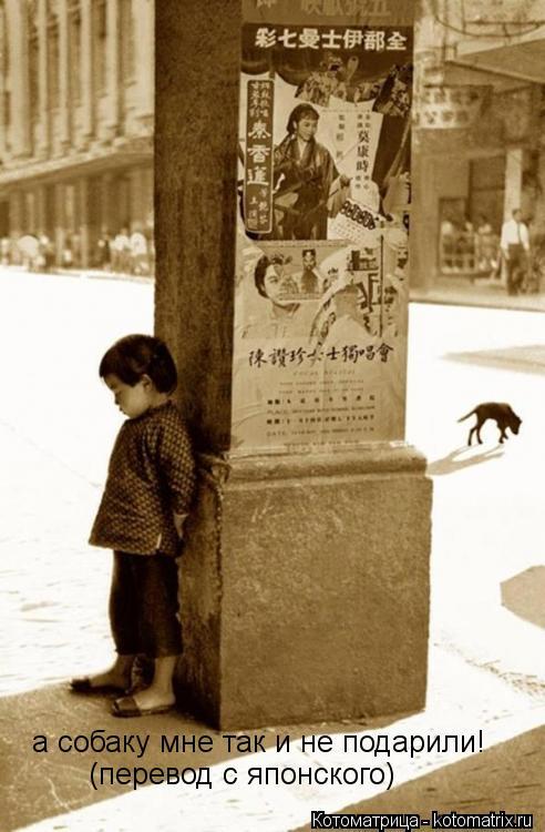 Котоматрица: а собаку мне так и не подарили! (перевод с японского)