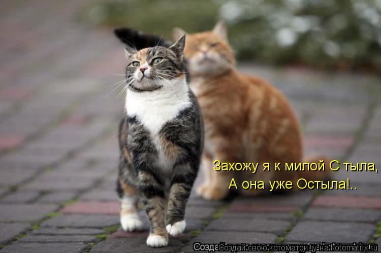 Котоматрица: Захожу я к милой С тыла, А она уже Остыла!..