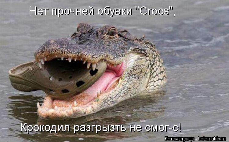"""Котоматрица: Нет прочней обувки """"Crocs"""", Крокодил разгрызть не смог-с!"""