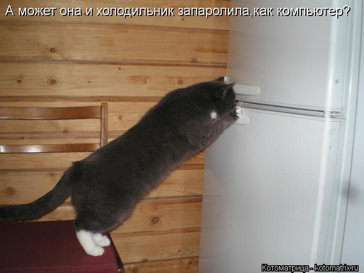 Котоматрица: А может она и холодильник запаролила,как компьютер?