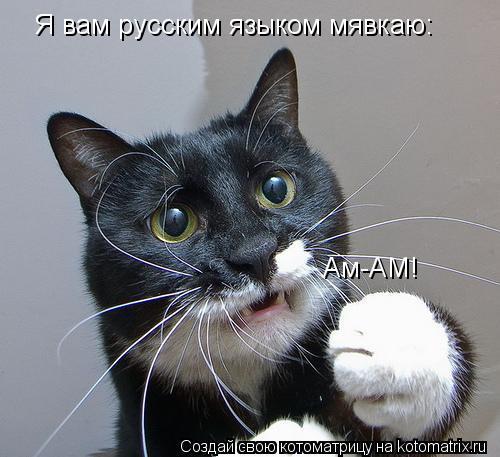 Котоматрица: Я вам русским языком мявкаю: Ам-АМ!