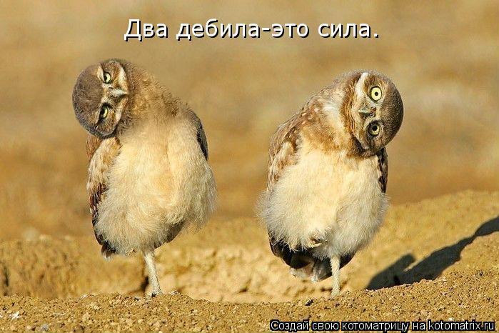 Котоматрица: Два дебила-это сила.