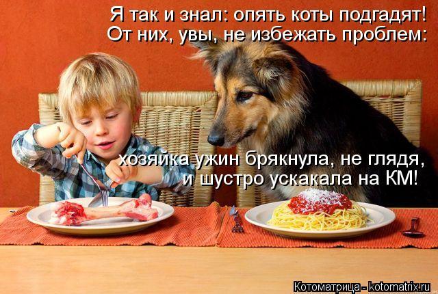 Котоматрица: Я так и знал: опять коты подгадят! От них, увы, не избежать проблем: хозяйка ужин брякнула, не глядя, и шустро ускакала на КМ!