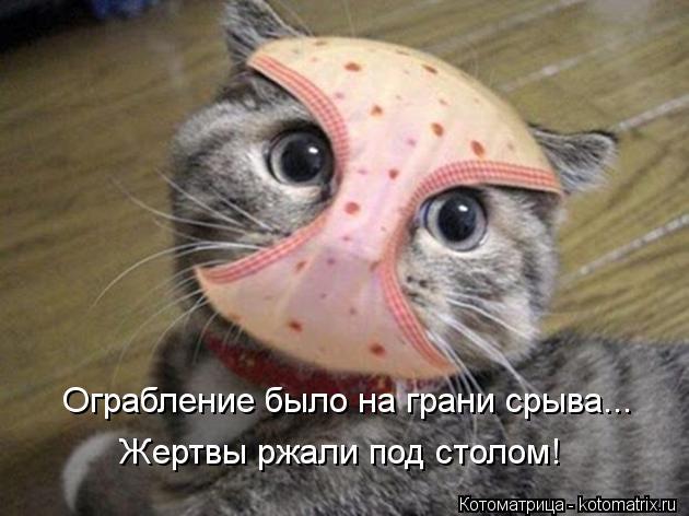 kotomatritsa_dX.jpg