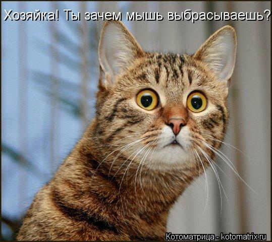 Котоматрица: Хозяйка! Ты зачем мышь выбрасываешь?