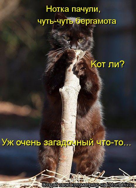 Котоматрица: Нотка пачули,  чуть-чуть бергамота Kот ли?  Уж очень загадочный что-то...