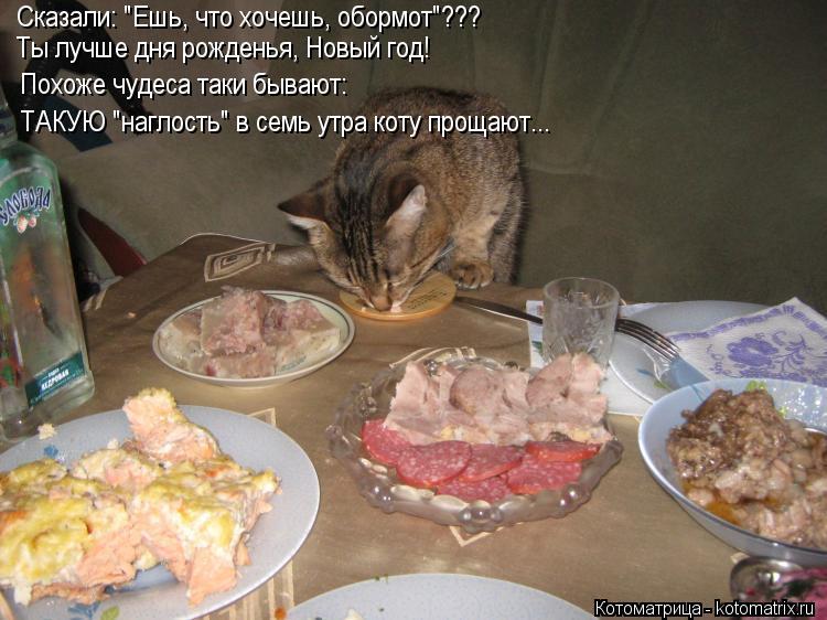 """Котоматрица: Сказали: """"Ешь, что хочешь, обормот""""??? Ты лучше дня рожденья, Новый год! ТАКУЮ """"наглость"""" в семь утра коту прощают... Похоже чудеса таки бывают:"""