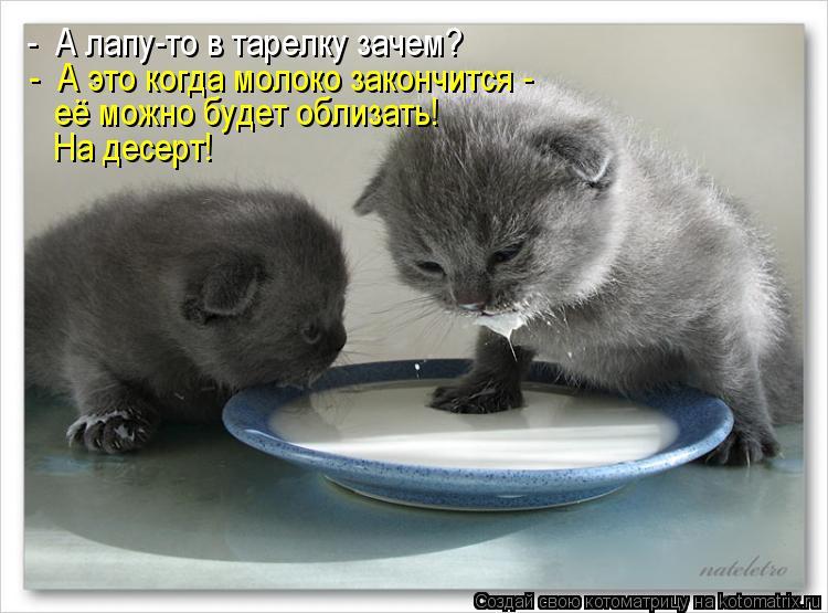 Котоматрица: -  А это когда молоко закончится -  её можно будет облизать! -  А лапу-то в тарелку зачем? На десерт!