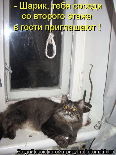 Котоматрица: - Шарик, тебя соседи со второго этажа в гости приглашают !