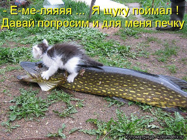 Котоматрица: Давай попросим и для меня печку ! - Е-ме-ляяяя ...  Я щуку поймал !