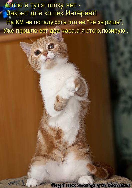 """Котоматрица: Стою я тут,а толку нет -  Закрыт для кошек Интернет! На КМ не попаду,хоть это не """"чё зыришь"""", Уже прошло вот два часа,а я стою,позирую.."""