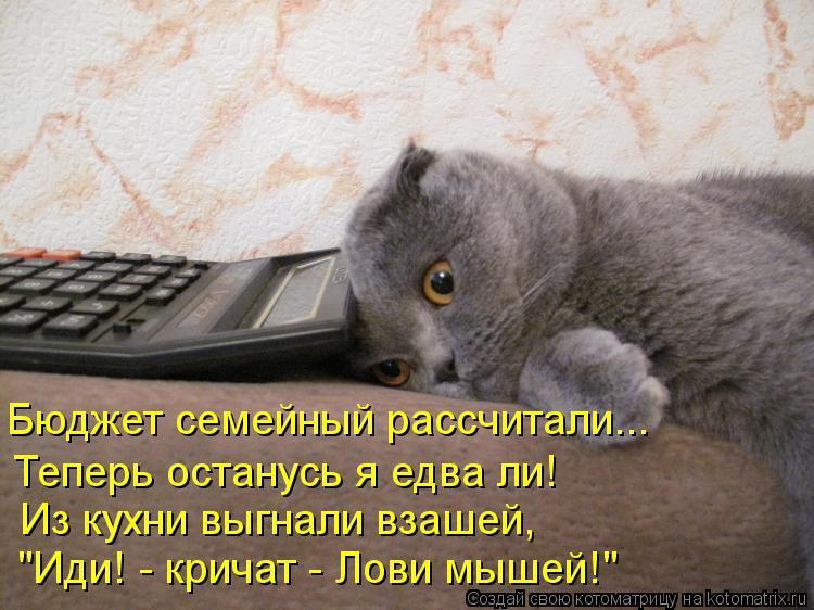 """Котоматрица: Бюджет семейный рассчитали... Теперь останусь я едва ли! Из кухни выгнали взашей, """"Иди! - кричат - Лови мышей!"""""""
