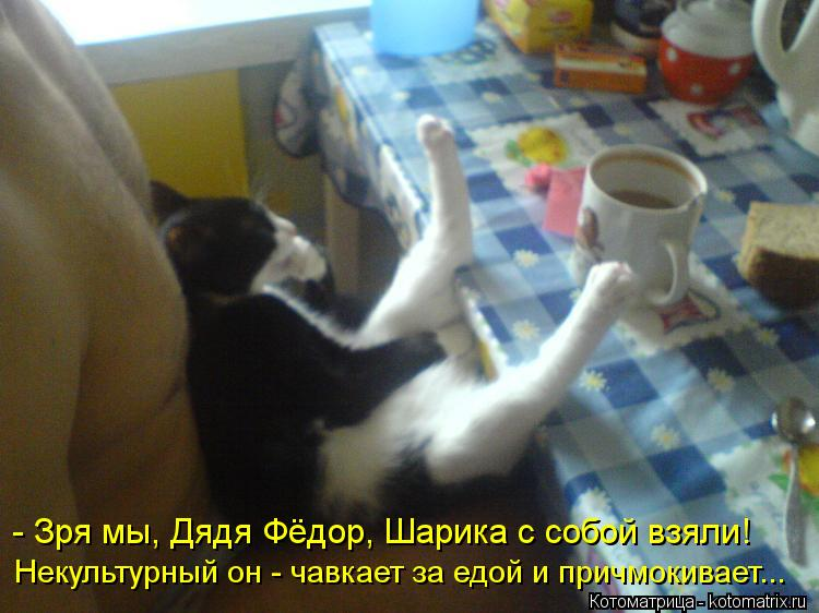 Котоматрица: - Зря мы, Дядя Фёдор, Шарика с собой взяли! Некультурный он - чавкает за едой и причмокивает...