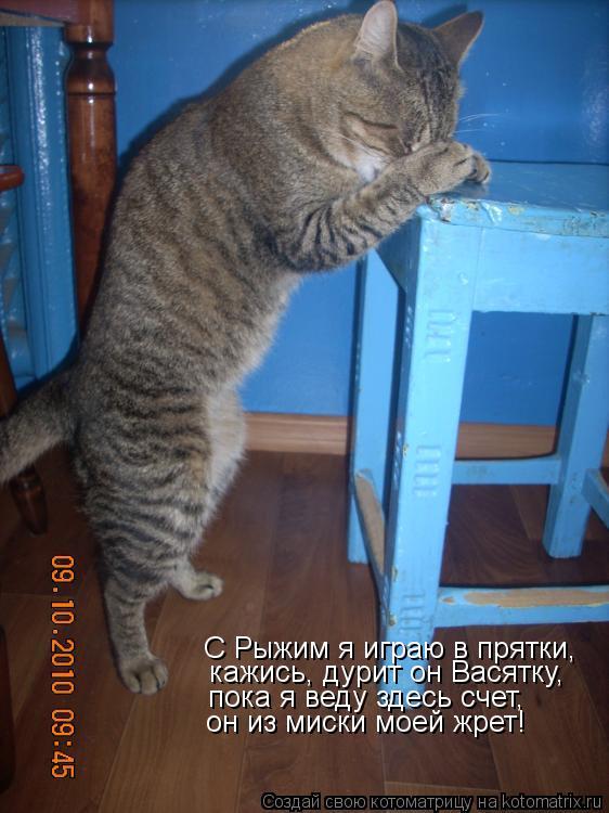 Котоматрица: С Рыжим я играю в прятки, кажись, дурит он Васятку, пока я веду здесь счет, он из миски моей жрет!
