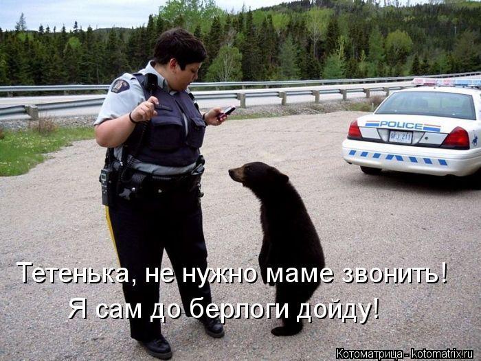 Котоматрица: Тетенька, не нужно маме звонить!  Я сам до берлоги дойду!