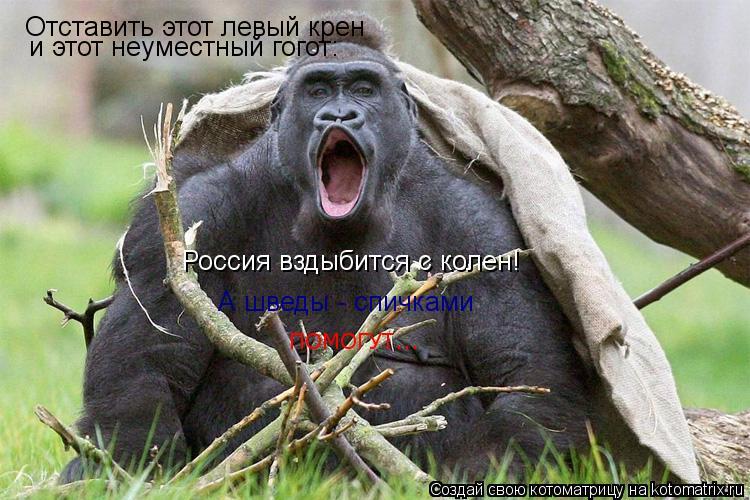 Котоматрица: Отставить этот левый крен и этот неуместный гогот: Россия вздыбится с колен! А шведы - спичками ПОМОГУТ...