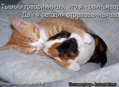 Котоматрица: Тыыыы говориииишь, что я - свиньяааааа... Легенды русского шансона ® Да - я сегодня страааааннаяаааа!....