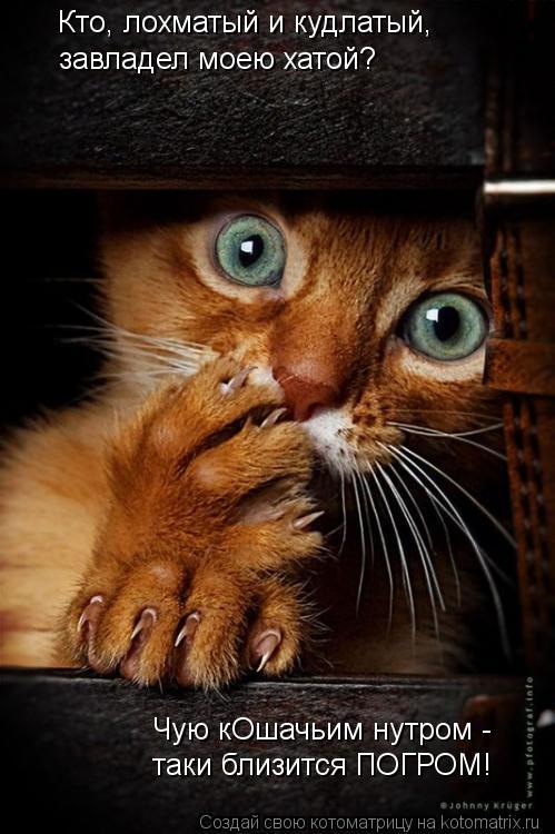Котоматрица: Кто, лохматый и кудлатый, завладел моею хатой? Чую кОшачьим нутром - таки близится ПОГРОМ!
