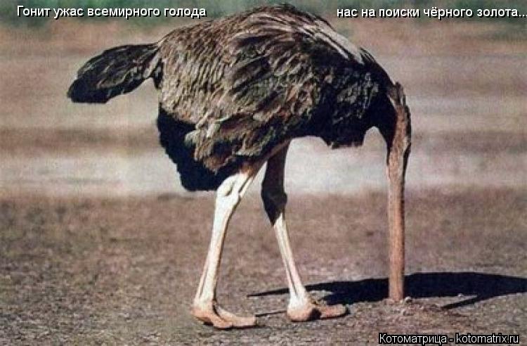 Котоматрица: Гонит ужас всемирного голода нас на поиски чёрного золота...