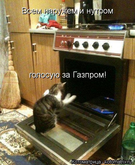 Котоматрица: Всем наружем и нутром голосую за Газпром!