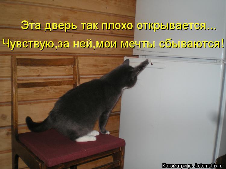Котоматрица: Эта дверь так плохо открывается... Чувствую,за ней,мои мечты сбываются!