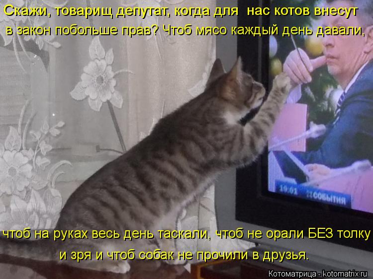 Котоматрица: Скажи, товарищ депутат, когда для  нас котов внесут  в закон побольше прав? Чтоб мясо каждый день давали,  чтоб на руках весь день таскали, что