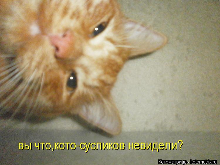 Котоматрица: вы что,кото-сусликов невидели?