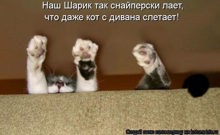 Котоматрица: Наш Шарик так снайперски лает, что даже кот с дивана слетает!
