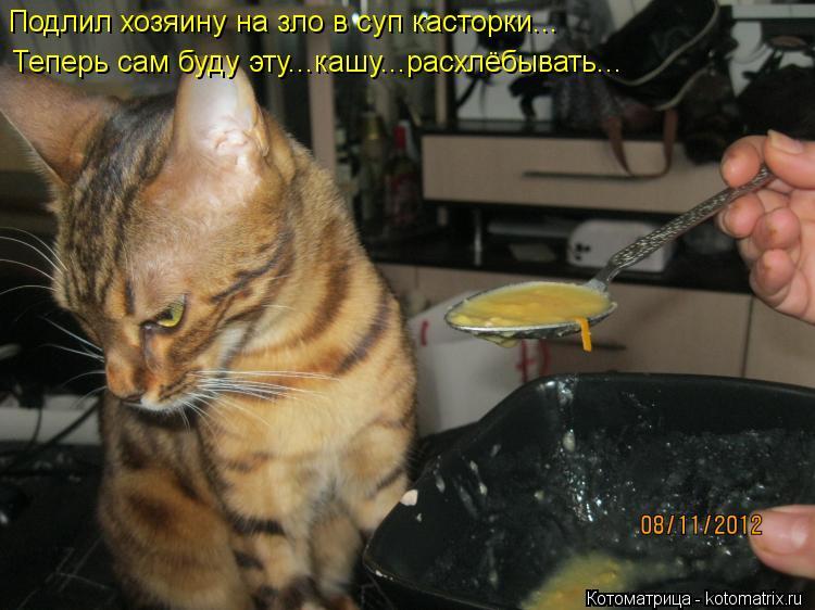 Котоматрица: Подлил хозяину на зло в суп касторки... Теперь сам буду эту...кашу...расхлёбывать...
