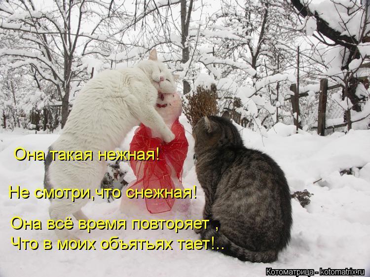 Котоматрица: Она такая нежная! Не смотри,что снежная! Она всё время повторяет , Что в моих объятьях тает!..